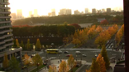 soft : Busy Intersection with Yellow Ginkgo Tree in Japan Time Lapse