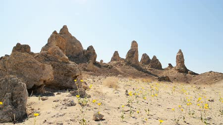 trona : Motion Control Dolly Shot of Desert Flowers at Pinnacles Dolly In 2