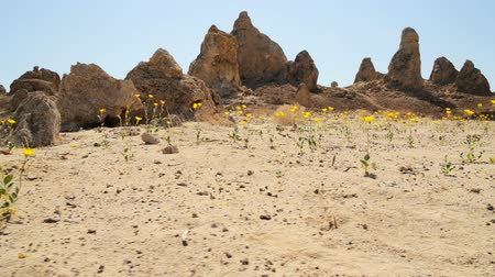 trona : Motion Control Dolly Shot of Desert Flowers at Pinnacles Dolly Right 1 Stock Footage
