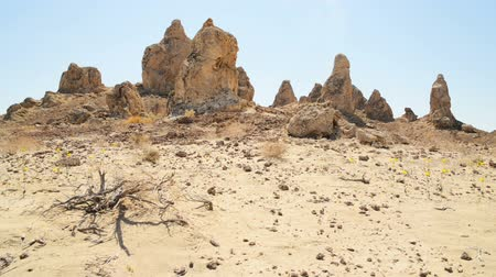 trona : Motion Control Dolly Shot of Dry Tree at Pinnacles Dolly Left  Down Stock Footage