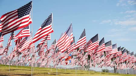 veterano : American National Flags on Green Hill under Blue Sky Vídeos