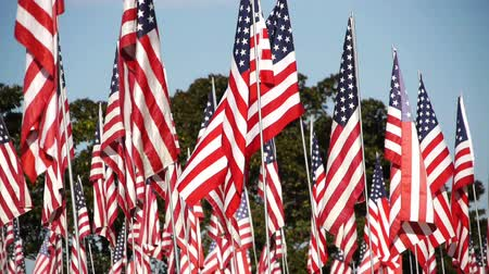 veterano : American National Flags