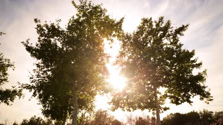 ormanda yaşayan : Time lapse footage with tilt down motion of the sun behind two tall trees at a park Stok Video