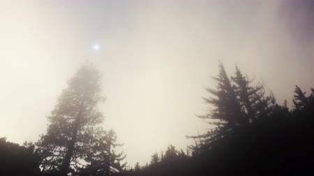 sinema : 4K Astrophotography Time Lapse of Cloudscape over Alpine Forest Stok Video