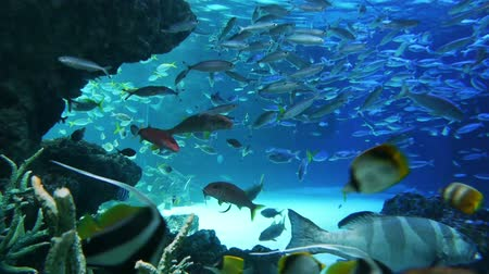 šnorchl : Underwater footage of variety of fish swimming in Pacific Aquarium at Sunshine 60 in Ikebukuro, Japan Dostupné videozáznamy