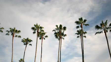 plac zabaw : Motion controlled pan right  tilt up time lapse of cloudscape over tall palm trees in Los Angeles, CA -Long Shot- Wideo