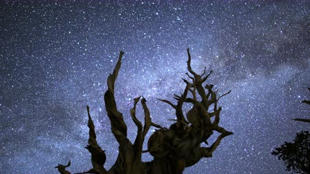 astroloji : 3 axis motion controlled astrophotography time lapse with dolly up, tilt up, pan right  tilt down motion of Milky Way galaxy over Ancient Bristlecone Pine Trees through dawn in White Mountain, California