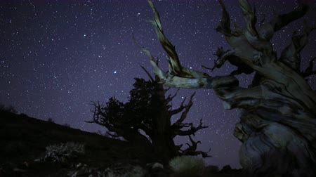 árvores : 3 axis motion controlled astrophotography time lapse with dolly left, tilt up, pan right  zoom in motion of stars over the oldest living trees at Ancient Bristlecone Pine Forest in White Mountain, California