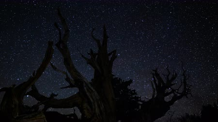 стрельба : Astrophotography Time Lapse footage with zoom out motion of starry sky over the oldest tree on Earth in Ancient Bristlecone Pine Forest in White Mountain, California