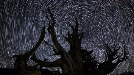 spřádání : Astrophotography Time Lapse footage with pan right motion of star trails over the oldest tree on Earth in Ancient Bristlecone Pine Forest in White Mountain, California