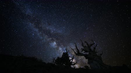 стрельба : Astrophotography time lapse footage of milky way galaxy rising over the oldest living trees at dawn in Ancient Bristlecone Pine Forest in White Mountain, California