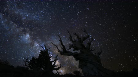 стрельба : Astrophotography time lapse footage of milky way galaxy rising over the oldest living trees at dawn in Ancient Bristlecone Pine Forest in White Mountain, California -Close Up-