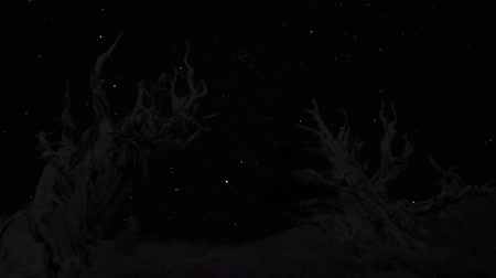 стрельба : Astrophotography Time Lapse footage with pan left motion of twilight sky over the oldest tree on Earth at dusk in Ancient Bristlecone Pine Forest in White Mountain, California Стоковые видеозаписи