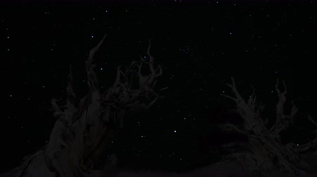 стрельба : Astrophotography Time Lapse footage with zoom out motion of twilight sky over the oldest tree on Earth at dusk in Ancient Bristlecone Pine Forest in White Mountain, California