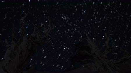стрельба : Astrophotography Time Lapse footage of star trails over the oldest tree on Earth at dusk in Ancient Bristlecone Pine Forest in White Mountain, California -Close Up- Стоковые видеозаписи