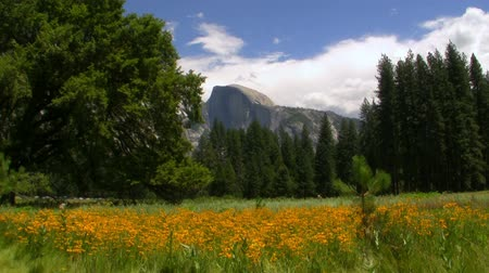 margarida : Time lapse of  Half Dome over carpet of yellow flowers at a meadow in Yosemite National Park, California Vídeos
