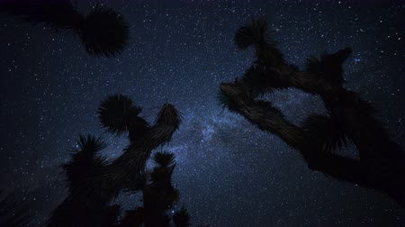 стрельба : Astrophotography time lapse footage of Milky Way galaxy over Joshua Tree at Red Rock Canyon State Park in Mojave Desert, California