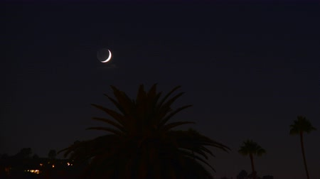 mroczne : Time lapse footage with tilt up motion of crescent moon setting over palm trees at twilight