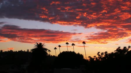 небесный : Time lapse footage of heavenly sunset afterglow over tropical landscape with palm tree in Los Angeles, California -Wide Shot-