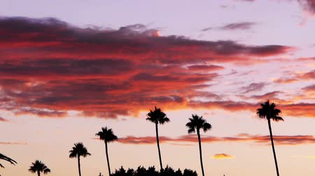 небесный : Time lapse footage of heavenly sunset afterglow over tropical landscape with palm tree in Los Angeles, California -Long Shot- Стоковые видеозаписи
