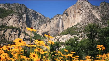 wspinaczka górska : 3 axis motion controlled time lapse footage with dolly left  tilt down  pan right  zoom out motion of Yosemite Falls over yellow flowers in Yosemite National Park, California
