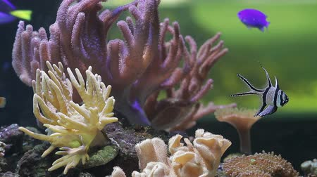 reef life : Underwater coral reef and fishes