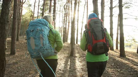hiking : Hiking people - two hiker women walking in forest at sunny day.  Hikers trekking as part of healthy lifestyle. steadicam shot Stock Footage