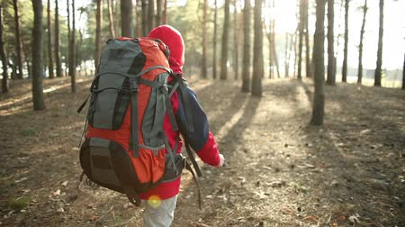 aventura : Child Walking in Adventure on Mountain Trails, Paths , hiking with backpack, Hikers Hiking in Forest, Enjoying Nature at Camping. Steadicam shot