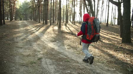 jungle : Child Walking in Adventure on Mountain Trails, Paths , hiking with backpack