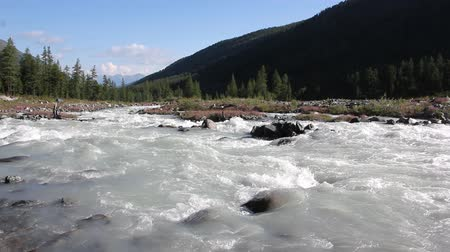 çakıl : Rushing Akkem River flowing over stones among the Altai mountains, Russia Stok Video