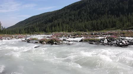 Rushing Akkem River flowing over stones among the Altai mountains, Russia Dostupné videozáznamy