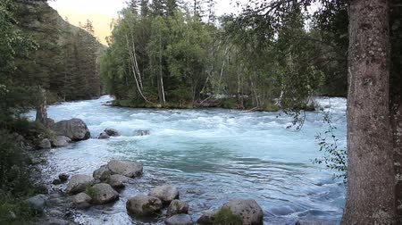 kočičí hlava : Kucherla River flowing among the Altai Mountains, Russia
