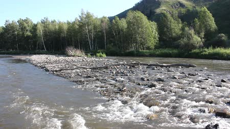 snag : Mountain Anuy River, Altai, Russia Stock Footage