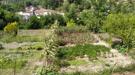 initiatief : Top view on vegetable garden. Countryside green garden.