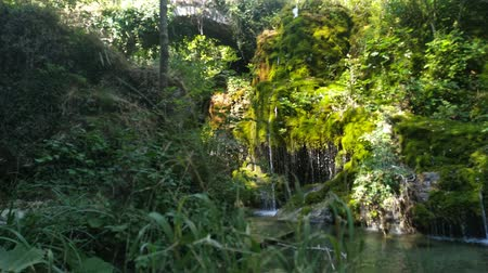 Waterfall falls in a lake. Sun shining through green leaves. Outdoor footage.