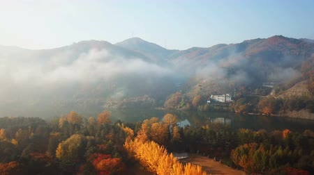 seoul : Aerial view autumn of Nami island,South Korea Stock Footage