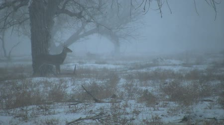 papel : Whitetail Buck in Snowstorm