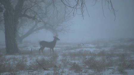 papel : Whitetail Buck in Snow