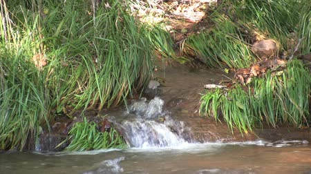 ribeiro : Babbling Brook Stock Footage