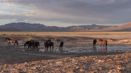 lő : Wild Horses in the Utah Desert