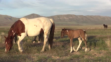 konie : Wild Horse Mare and Foal Wideo