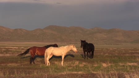 západ : Wild Horses in the Utah Desert