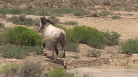 koń : Wild Horse at a Desert Waterhole