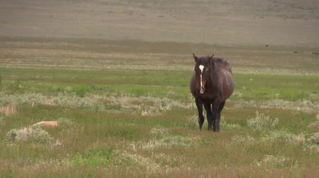 kısrak : Wild Horse Mare and Foal Stok Video