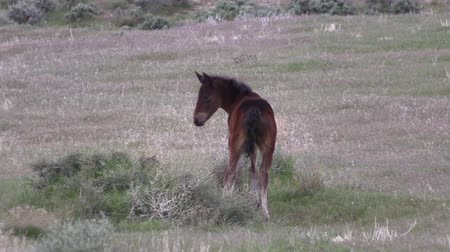 Wild Horse Foal Wideo