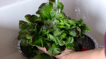 Woman washing green fresh salad