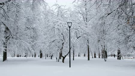 Beautiful snow-covered city park in winter