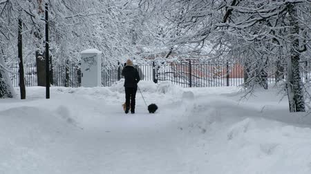 Beautiful snow-covered city park in winter. Unrecognized woman walking with two dogs