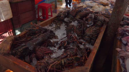 oysters : Fresh catch of lobsters in the fish market Stock Footage