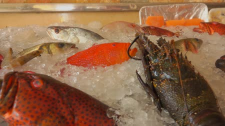 midye : Showcase of a fish restaurant with various types of fish and crustaceans Stok Video